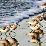 SEA Days: Birds of a Feather
