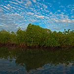 Perspectives Lecture: Mangroves: The Skin of Our Coasts