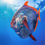 OPAH : A Sustainable Seafood Event