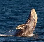 Science, Exploration, & Adventure: Whale Tales