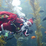Seas 'n' Greetings at Birch Aquarium