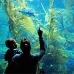 Adventure Aquarium!