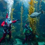 Birch Aquarium's Seas 'n' Greetings