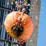50th Annual Muir College Pumpkin Drop
